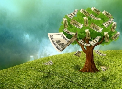 money on the tree